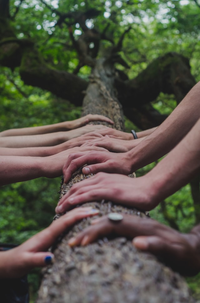 Image of hands on a tree trunck